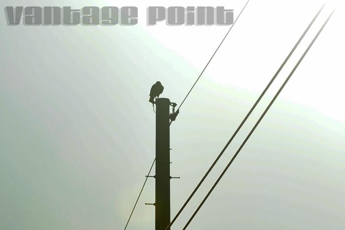 vantagepoint2